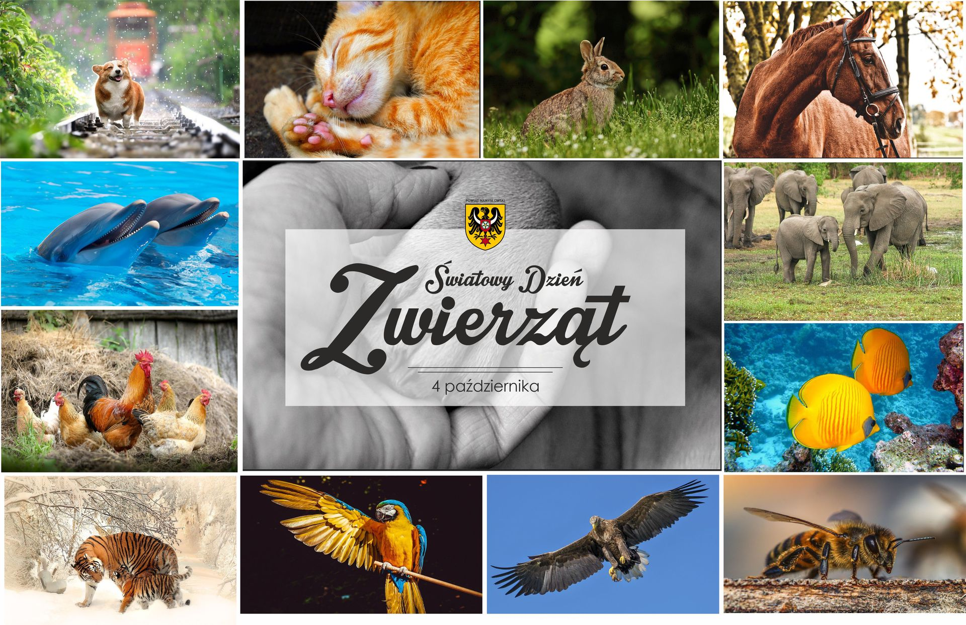 Światowy dzień zwierząt.jpeg