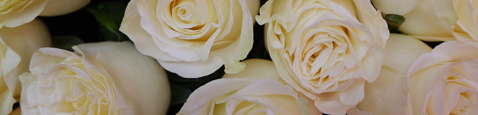 roses-g2b7cf9bfc_1920000.jpeg