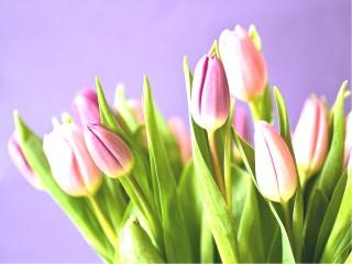 Życzenia - Dzień Samorządowca - Kwiaty.jpeg