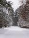 Galeria Kalinowski 3 powiat zima