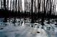 Galeria Rogalski powiat zima